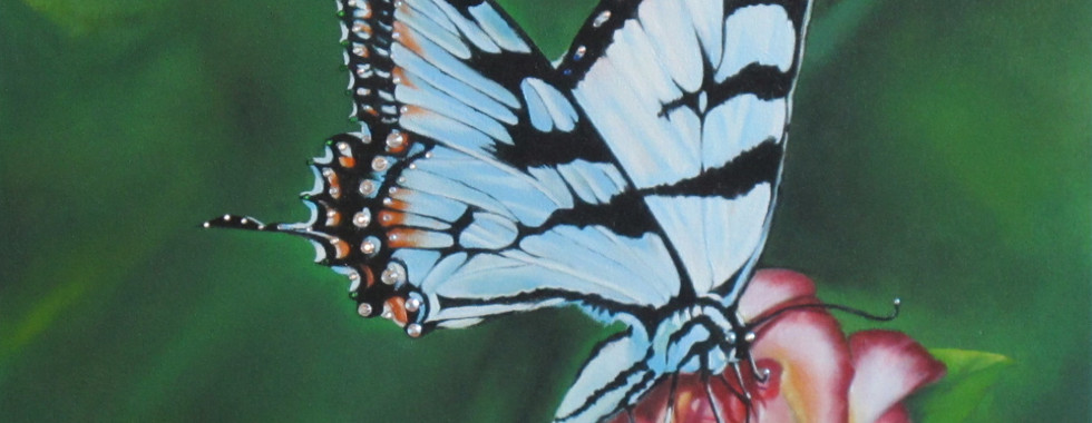 Asian-Swallowtail Butterfly