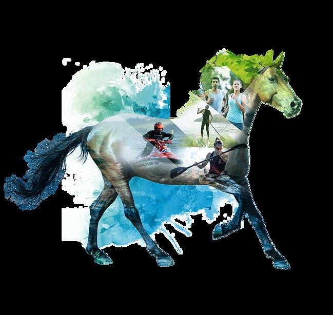 apresenta-sport-cavalo.png