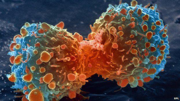 El cancer no se curara hasta que entendamos esto