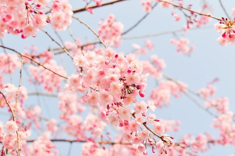 ¡Ya está aquí! por fin la primavera