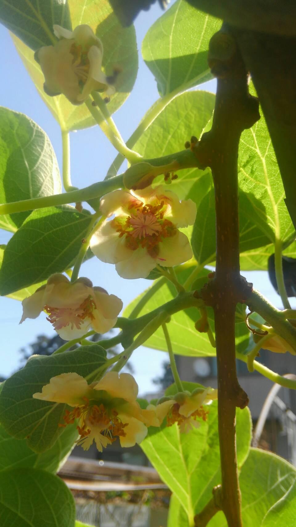 レインボーレッド 花