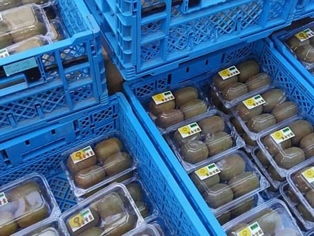 黄金甘露収穫&出荷です