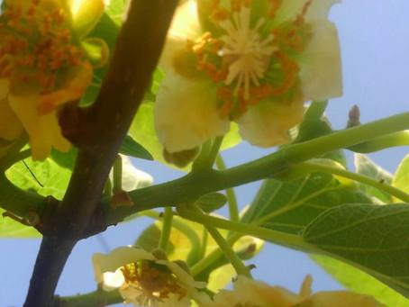 レインボーレッドの花