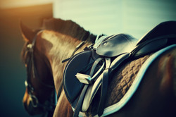 Saddle-with-stirrups-on-a-back-of-a-horse-000063300109_Full