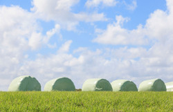 The-blurry-scene-of-white-wrapped-silage-and-sky-background-000071232011_Double
