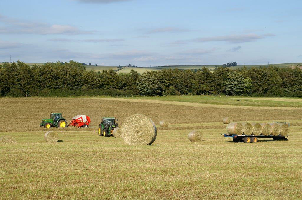 haylage073-(2)easthaylage