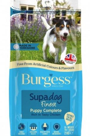 Burgess Puppy