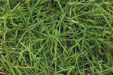 Readigrass Dried Grass