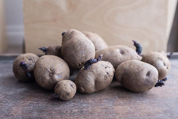 Seed Potatoes - Russian Blue
