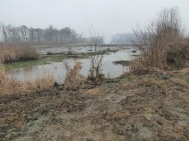 Vijver Molenbeekvallei & omgeving