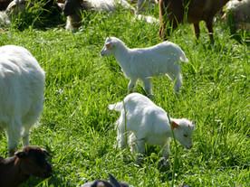 Op stap met de herder