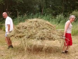 Maaibeheer in Molenbeekvallei