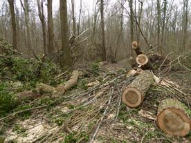 Stormschade in het Kastanjebos