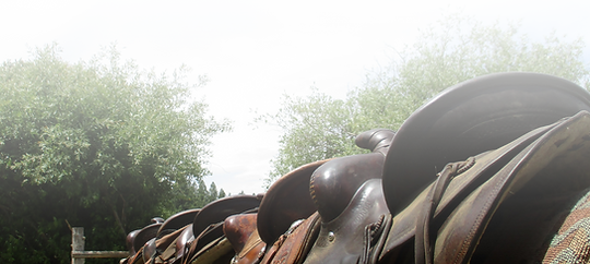 saddles.png