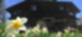lodge daffodils.png