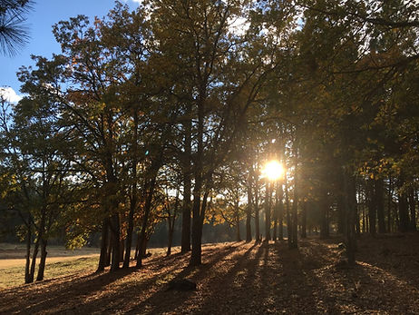 Photo of sun coming through trees, and a Wendell Berry poem.