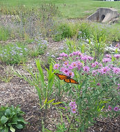 Butterfly FOR RAIN GARDEN EVENT.jpg