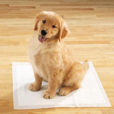 Consultoria para seu cãozinho