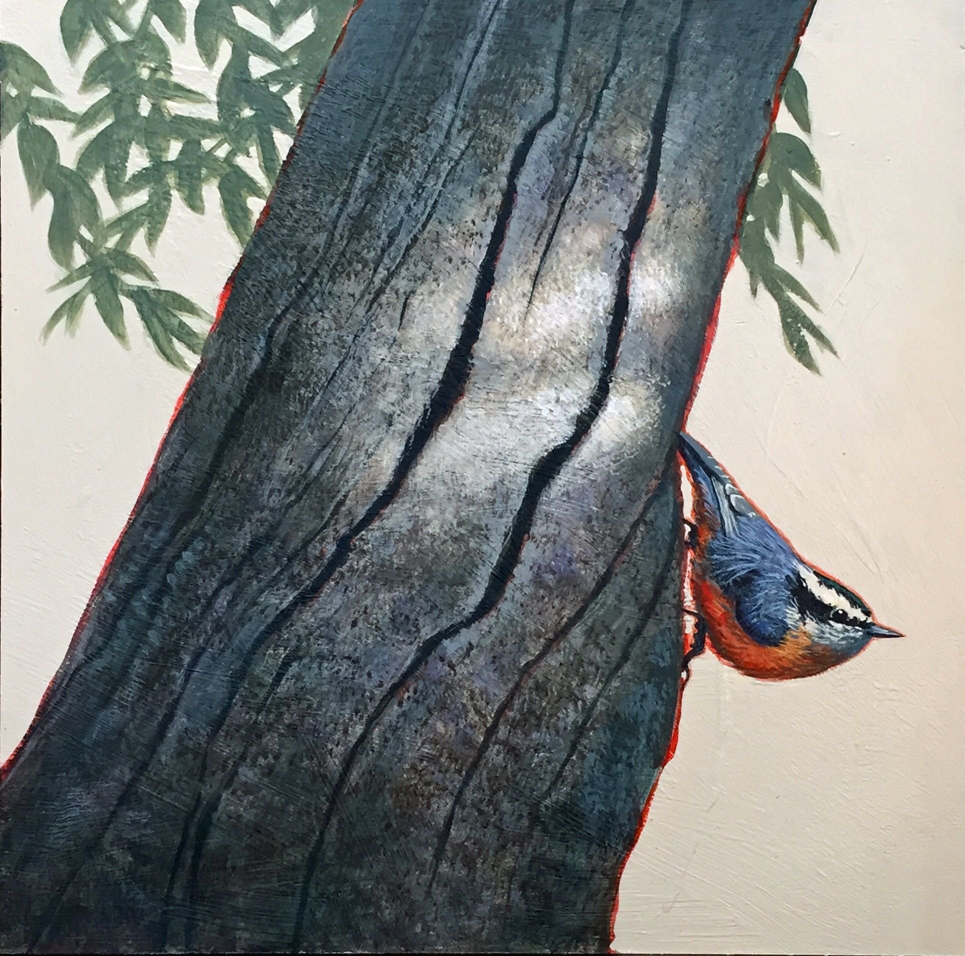 Nuthatch 12x12 SOLD