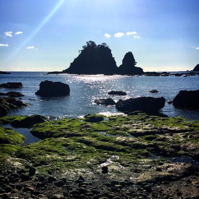 南伊豆は世界有数の特殊な地形で海藻豊富。
