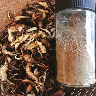 大量に採れるので干し椎茸と、さらにパウダーにしておく。出汁。
