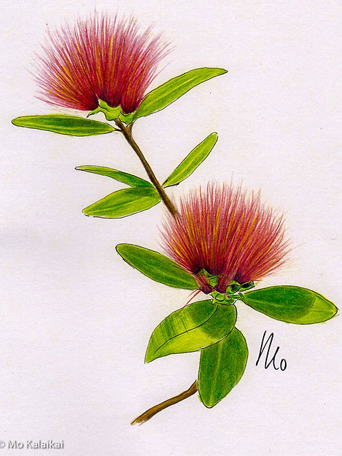 Blank Card-Lehua Flower by Mo Kalaikai