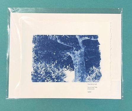 Sycamore Tree by Sue Abramson