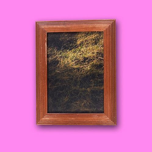 Framed photographs by Zeal Eva