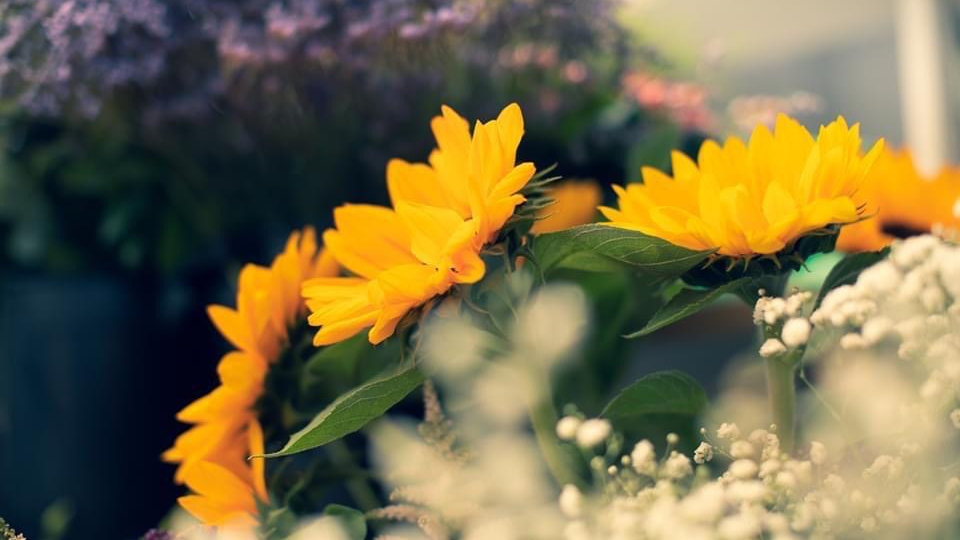 6 Month Standard flower Subscription Voucher