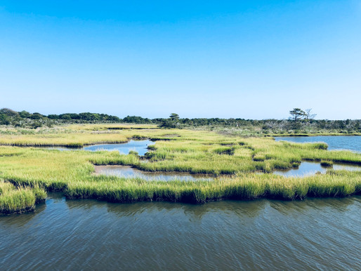 Assateague Island (Maryland & Virginia)