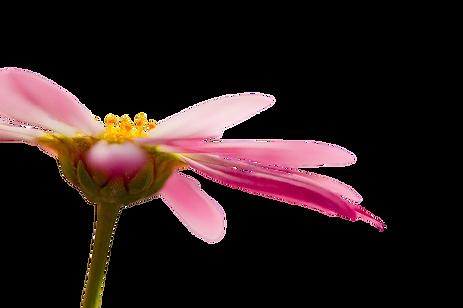 nutritherapie-holef-olfaction-olfactothe