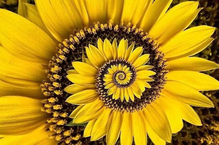 soleil fleur.jpg