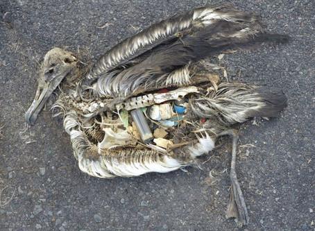 Alternative Options for Plastic