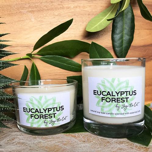 Eucalyptus forest - Eucalyptus, Tea tree, Marjoram