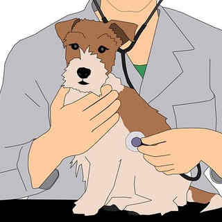Pet Grooming & Vet Content Writer