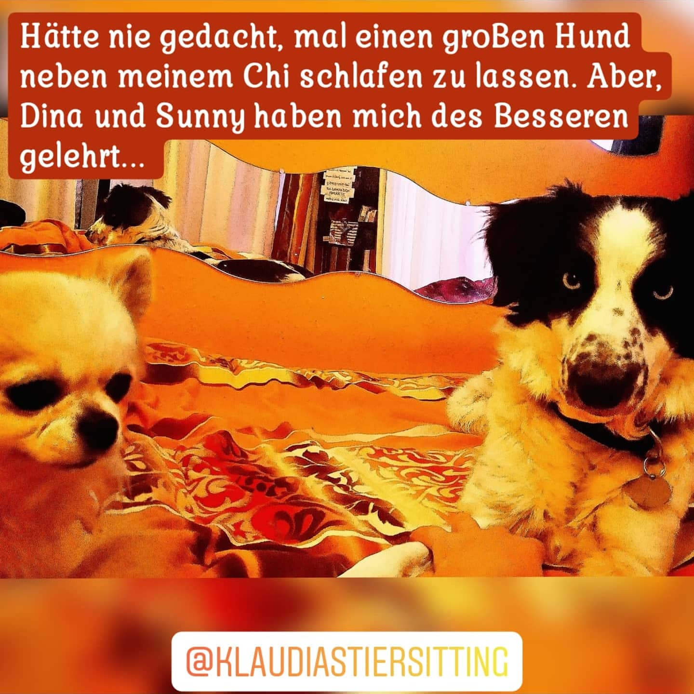 @KlaudiasTiersitting_Goldene_Mitte_-_Hun