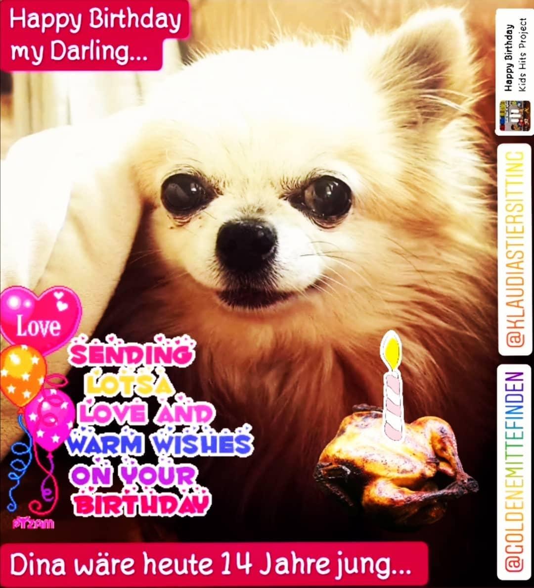 @KlaudiasTiersitting_Chihuahua_Hundebetr