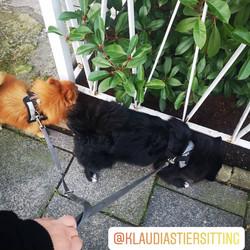 @KlaudiasTiersitting_Hundebetreuung_&_Ga