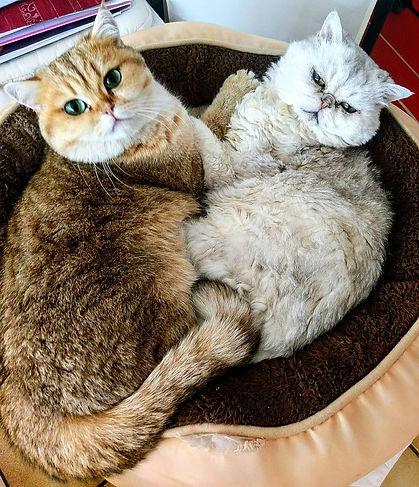 @Klaudias Tiersitting: Unsere Katzenfreundinnen Eule und Mimi©Klaudia Maria Hornakova