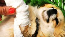 Lohnt sich eine Tierversicherung für Hunde & Katzen? Wenn ja, welche ist gut?