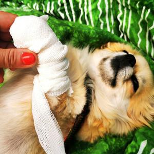 Tierversicherung für Katz & Hund