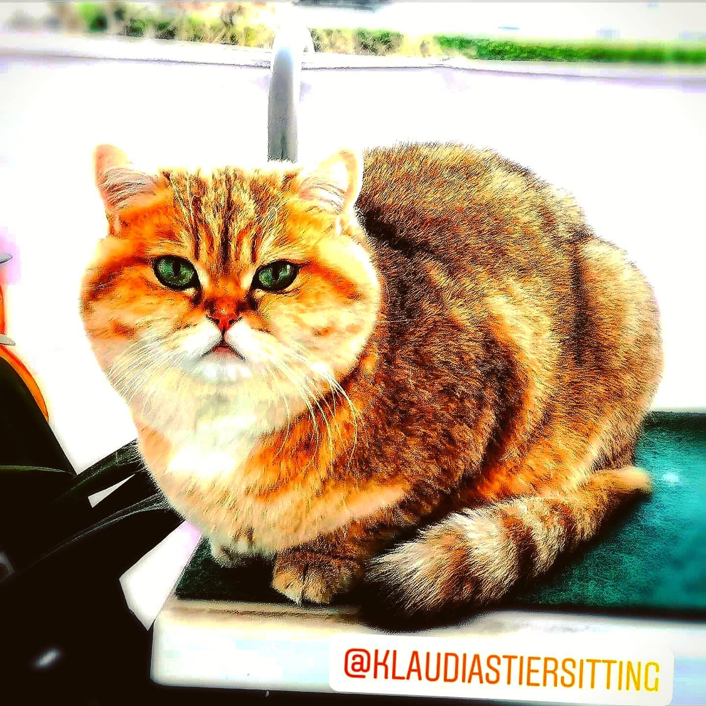 @KlaudiasTiersitting Goldene Mitte - Hundebetreuung Huta Urlaubsbetreuung Hundepension mit Tiersitti