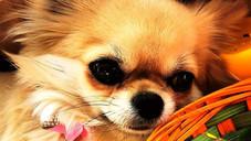 Ungesunde Tiernahrung - Gesundes Hundefutter und  Katzenfutter mit viel Fleisch und ohne Chemie?