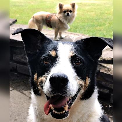 _KlaudiasTiersitting_Hundebetreuung_&_Gassi_Service_mit_Huta_Hundetagesstätte_Hundepensio