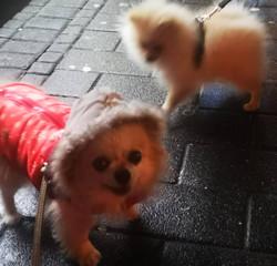 @KlaudiasTiersitting Hundebetreuung & Gassi Service mit Huta Hundetagesstätte Hundepension  in Köln