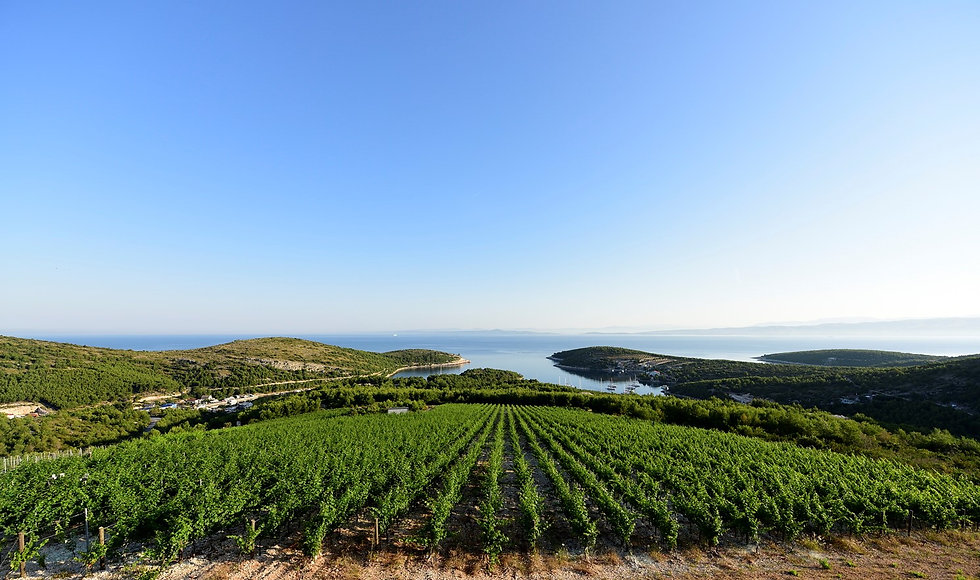 Panorama 1 - vinograd Tomić - naslovnica