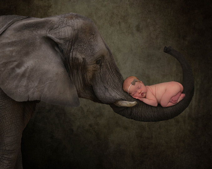 elephantnewborn2etsy.jpg