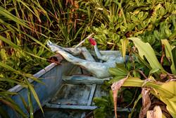 'Jungle Boat'