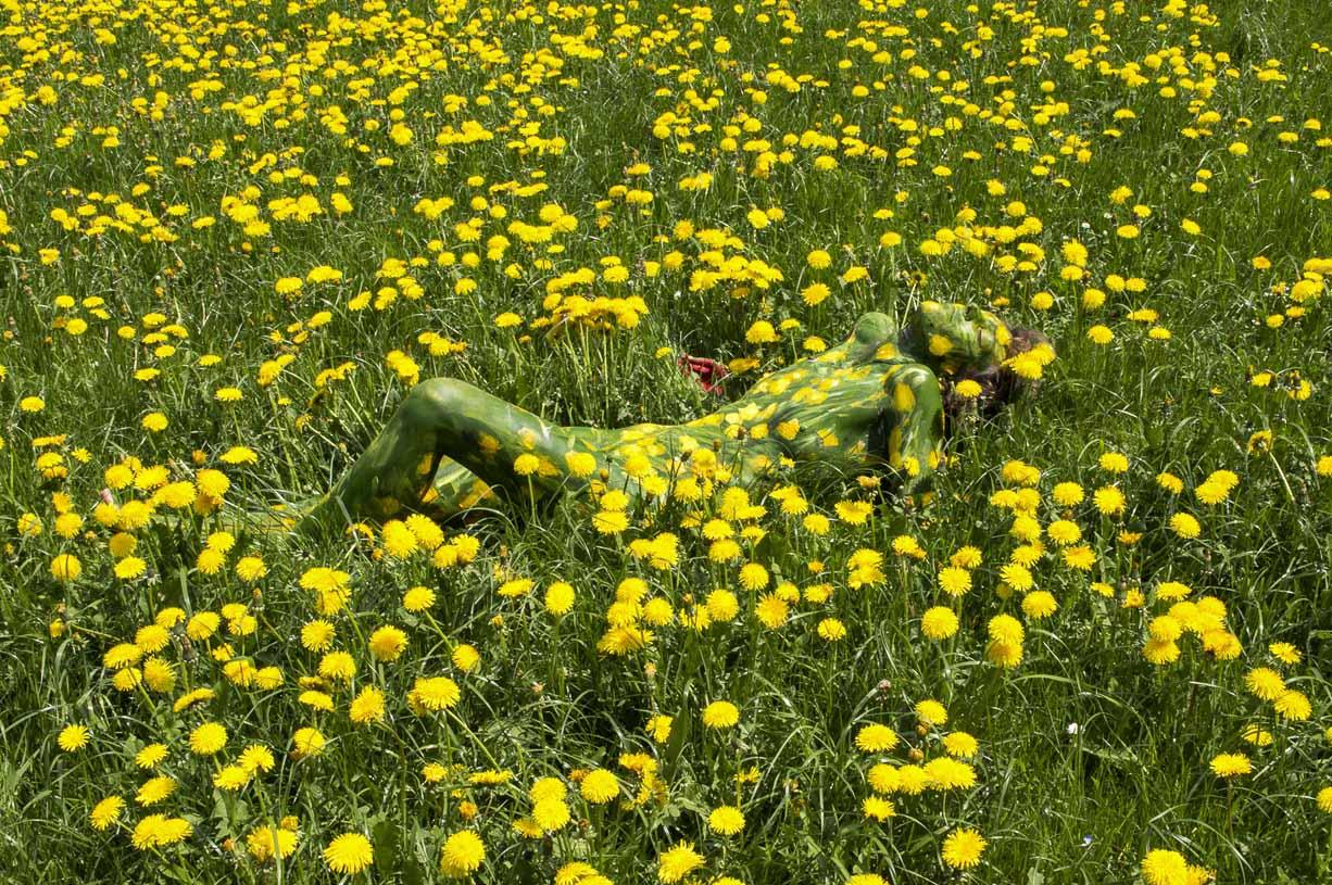 'Dandelion Field'