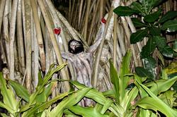 'Mangrove Roots'